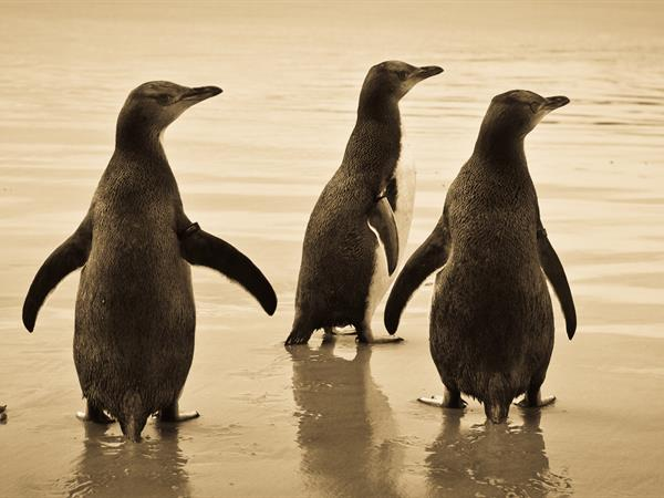 penguin-place-nz